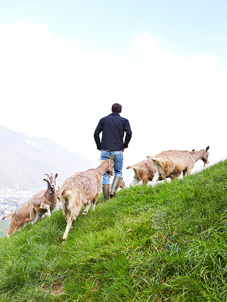 goat farm in switzerland, Toni Odermatt